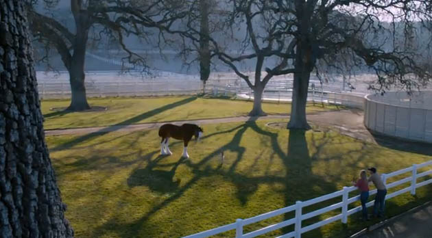 Budweiser-Super-Bowl-XLVIII-commercial-Puppy-Love-2